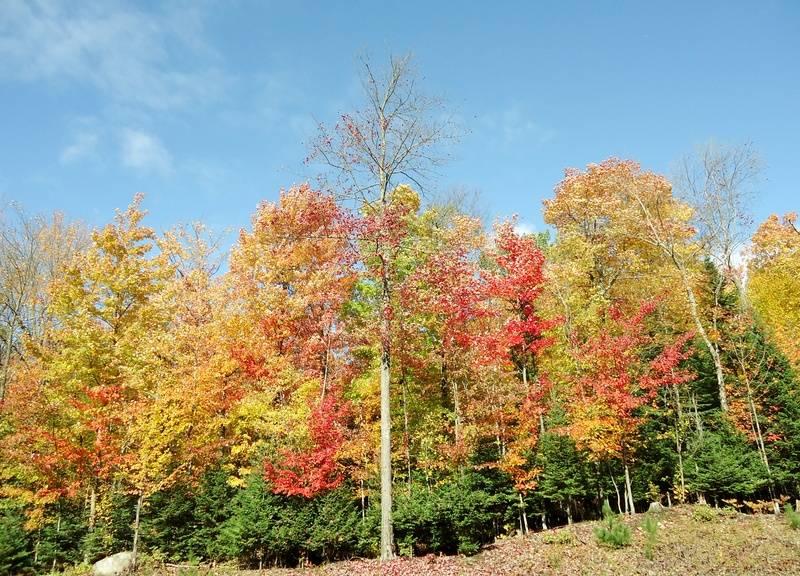 Autumn at Byron Park
