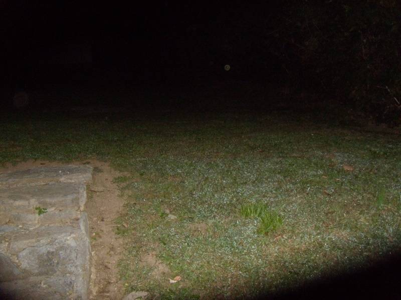 Orb in back yard
