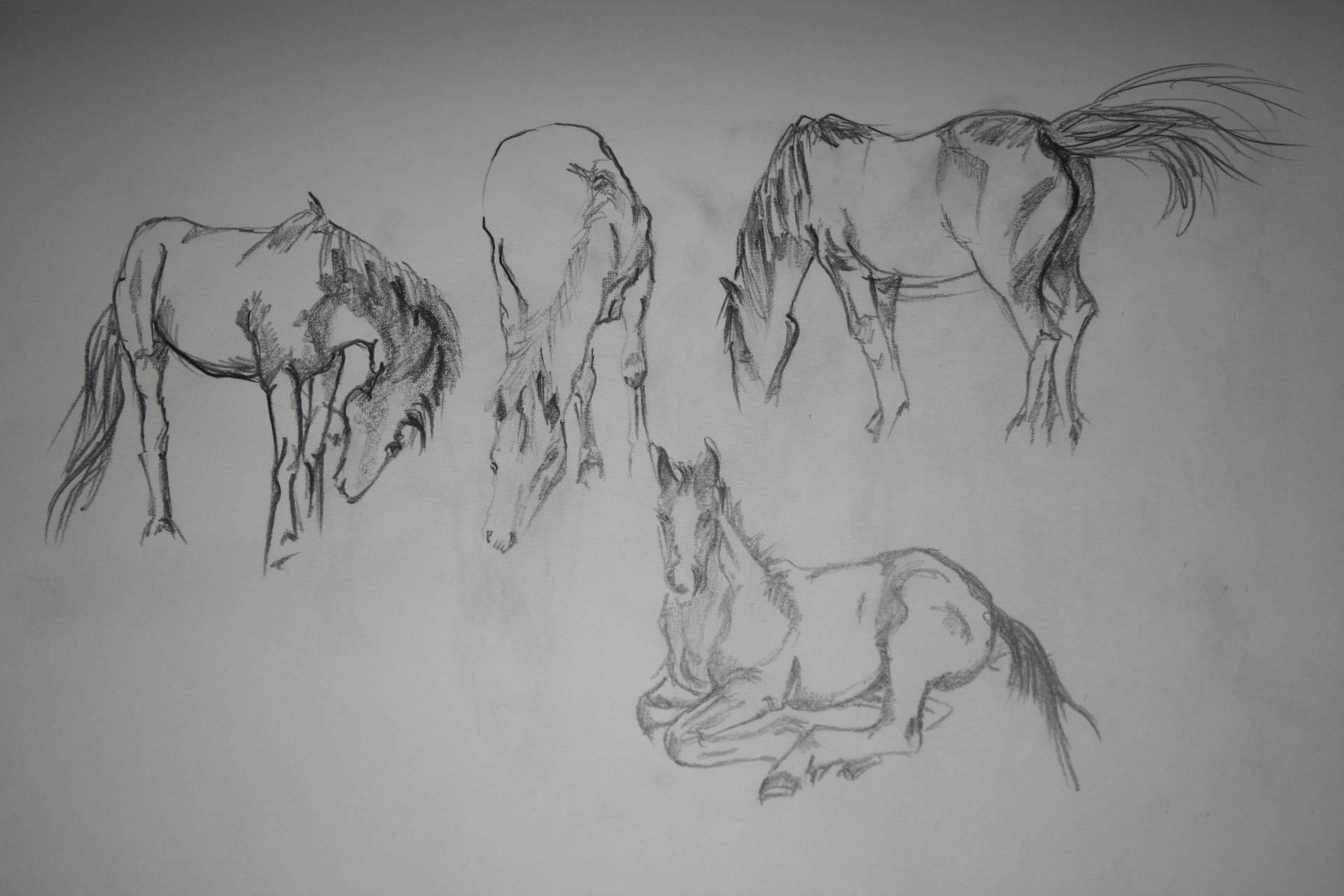 Horses at Boxmoor Common