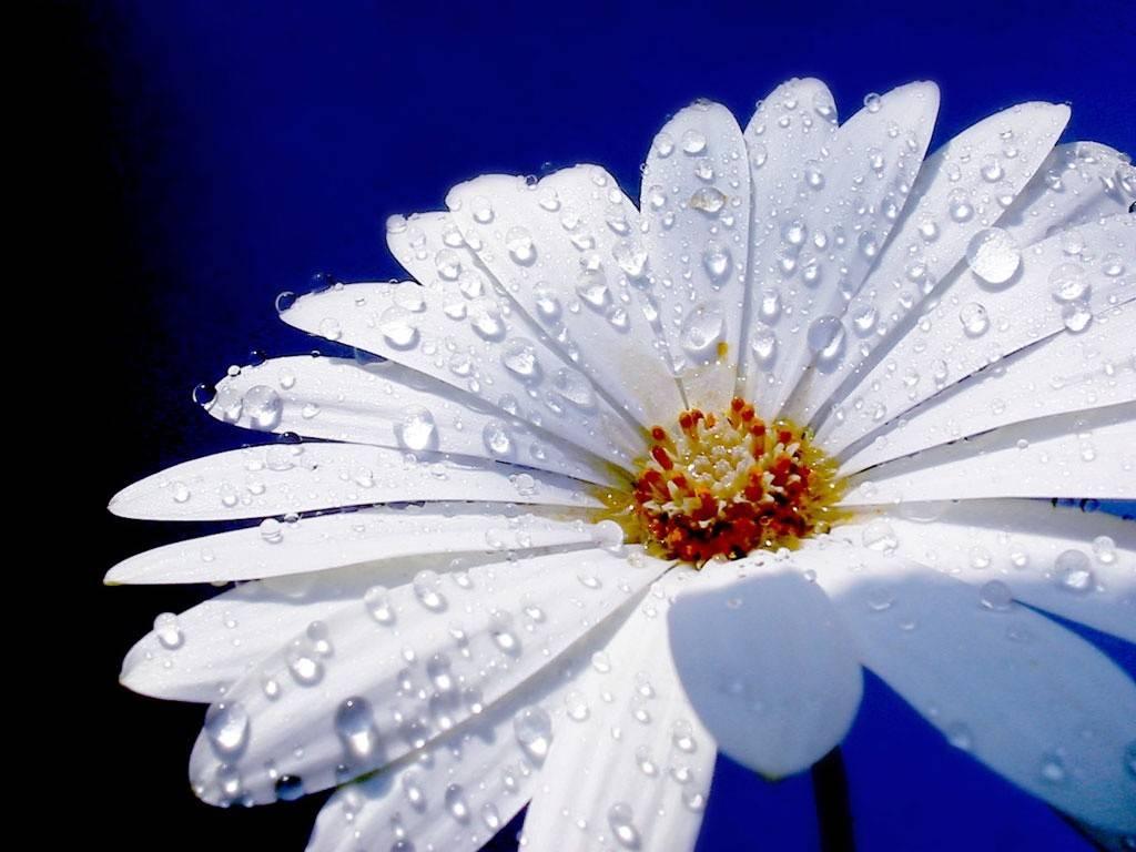 drop on flower