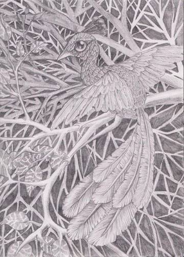 Fancy Bird