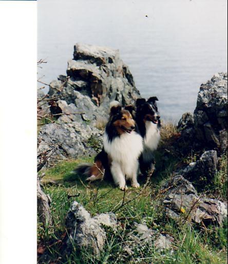 Ch. Liska The Wandering Minstrel CD& Liska Ain't Miss Behaven CD