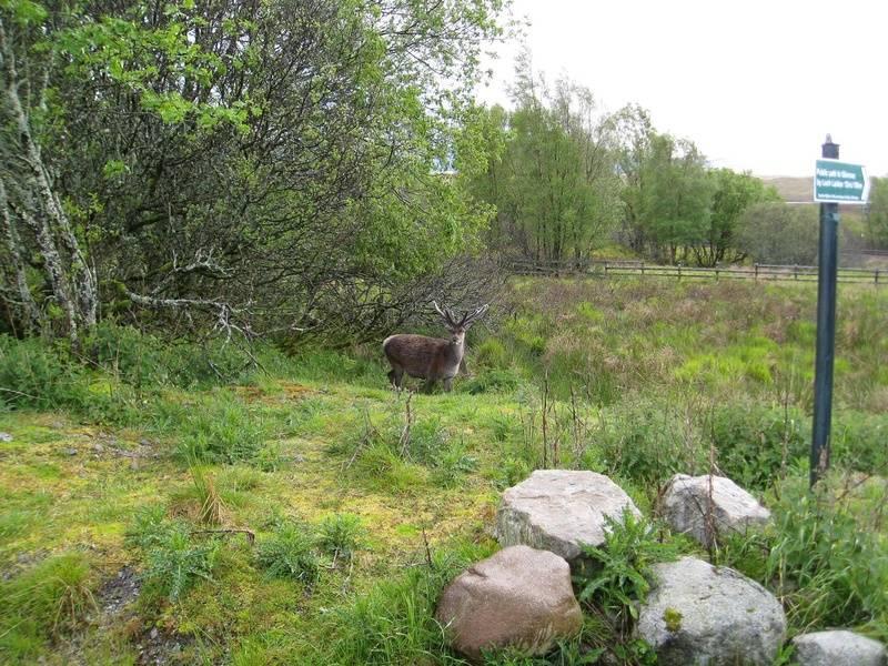 Wild in Rannoch