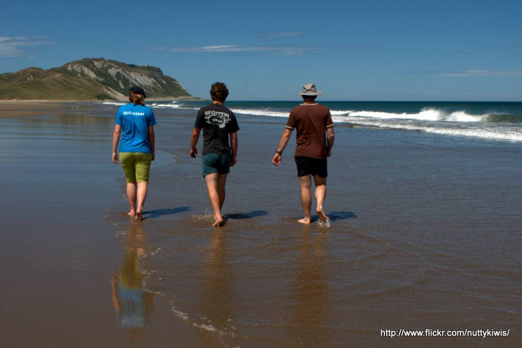 Herbertville Beach 1