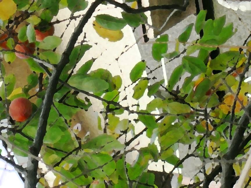 Persimmon Tree Photo Art