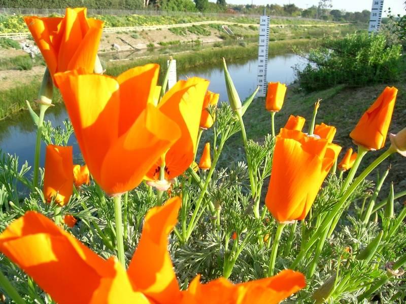 Wild Flowers2
