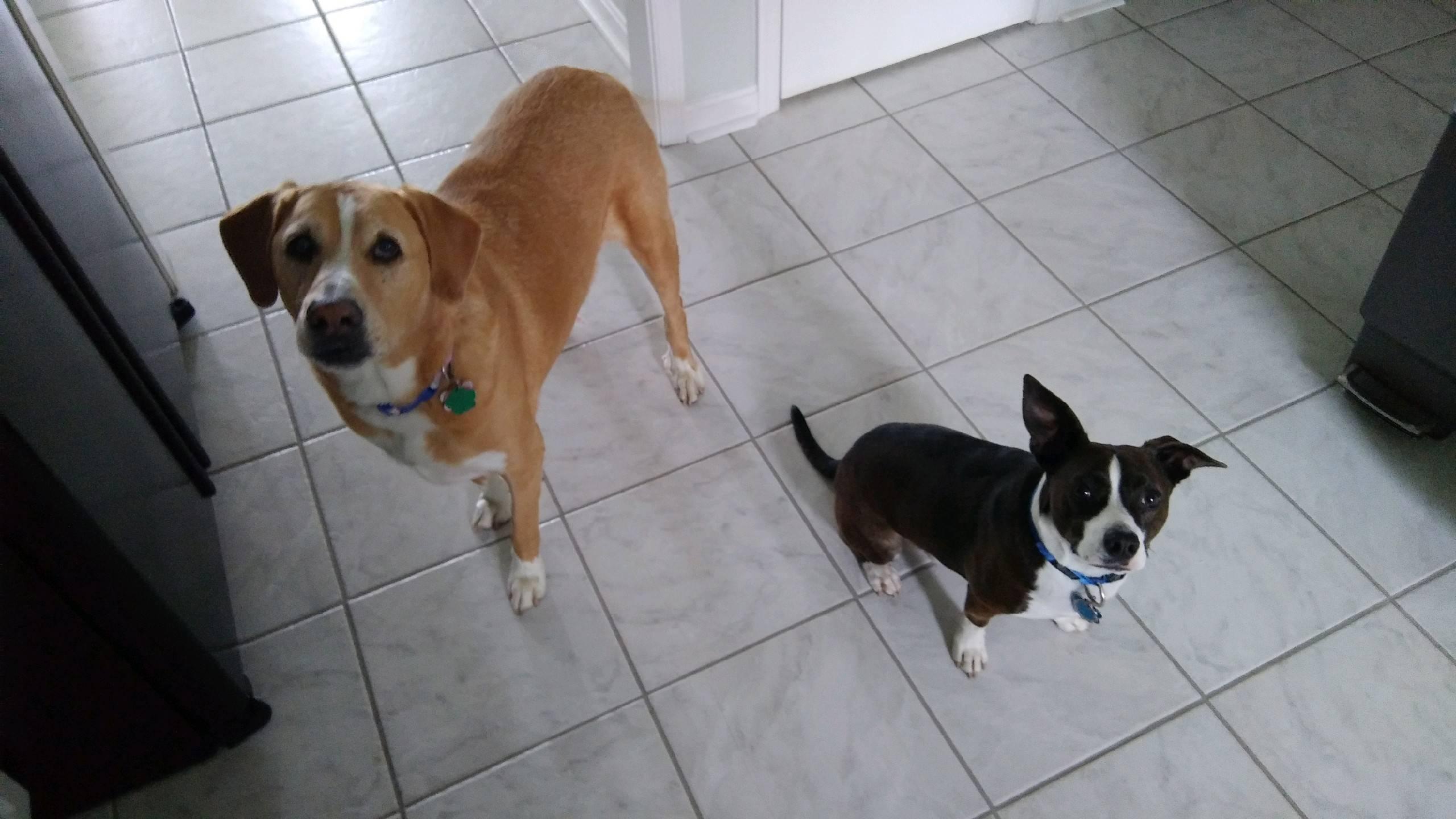 Skylar and Jetty