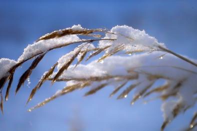 sniegas2