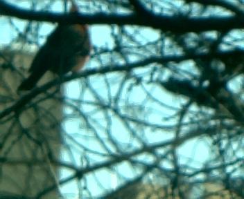 Birds of Sherman Creek