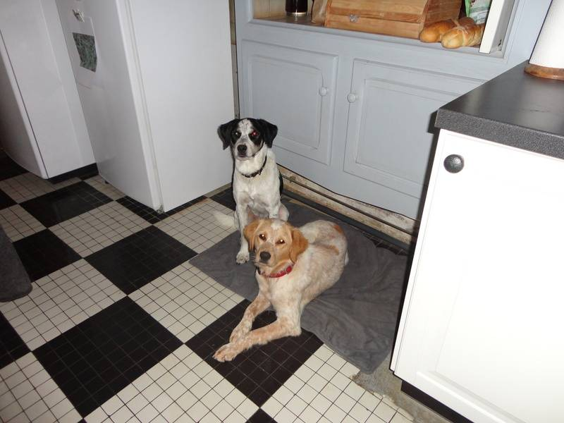 Mutley and Jess