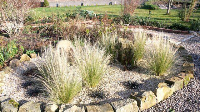 grasses in stanes bed