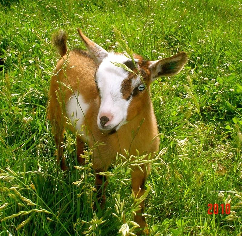 Little Miss Bambi