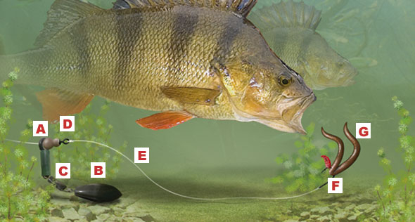 Perch Leger Rig