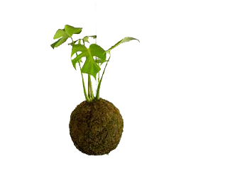 Moss Ball With Monstera Deliciosa