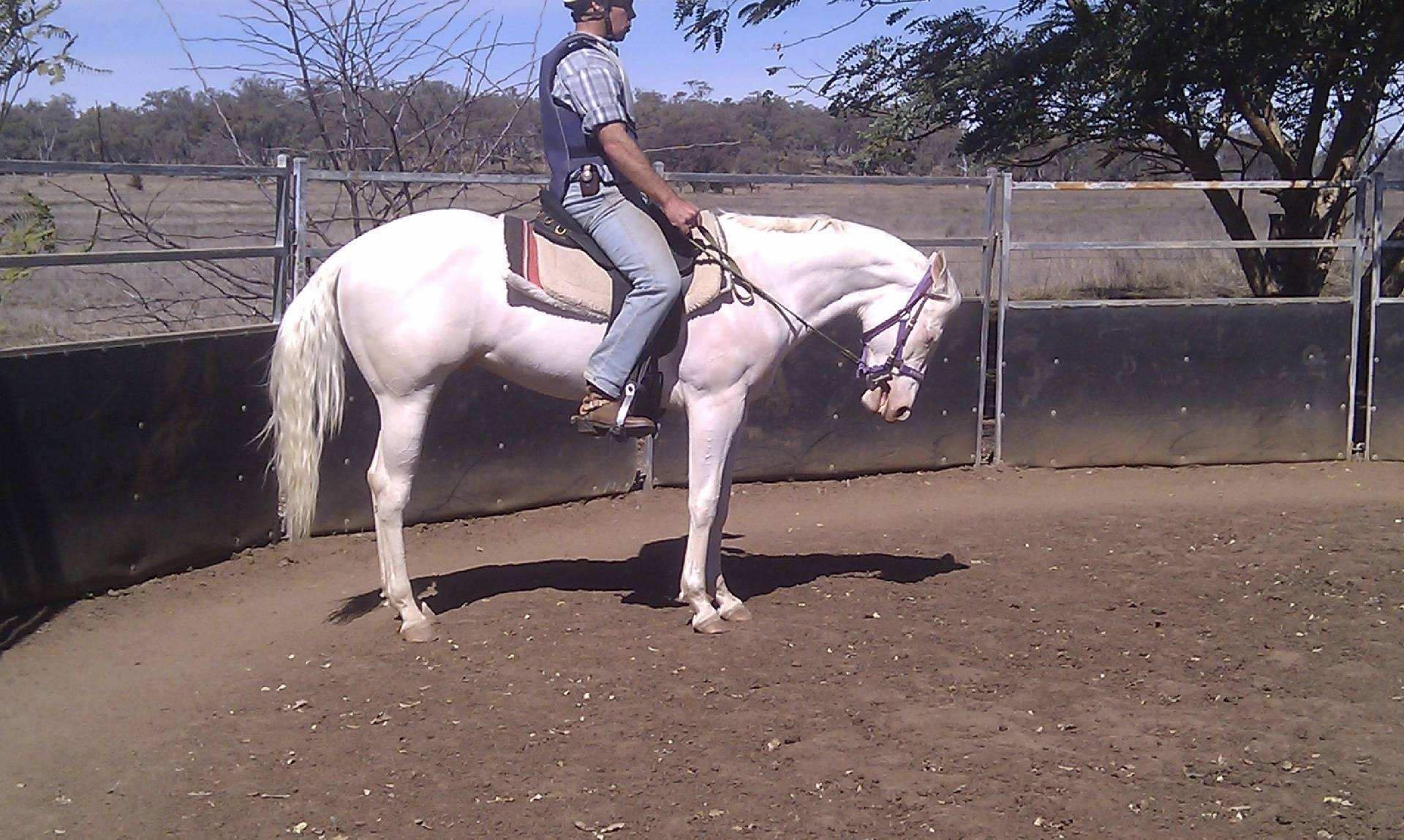 Splashy's Sire the late LND Platinums White Night, he was a supurb riding horse