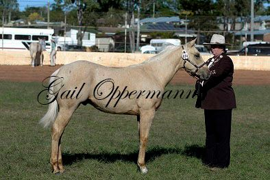 Tassie at his first show 9mth of age
