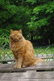 Kass Cärry