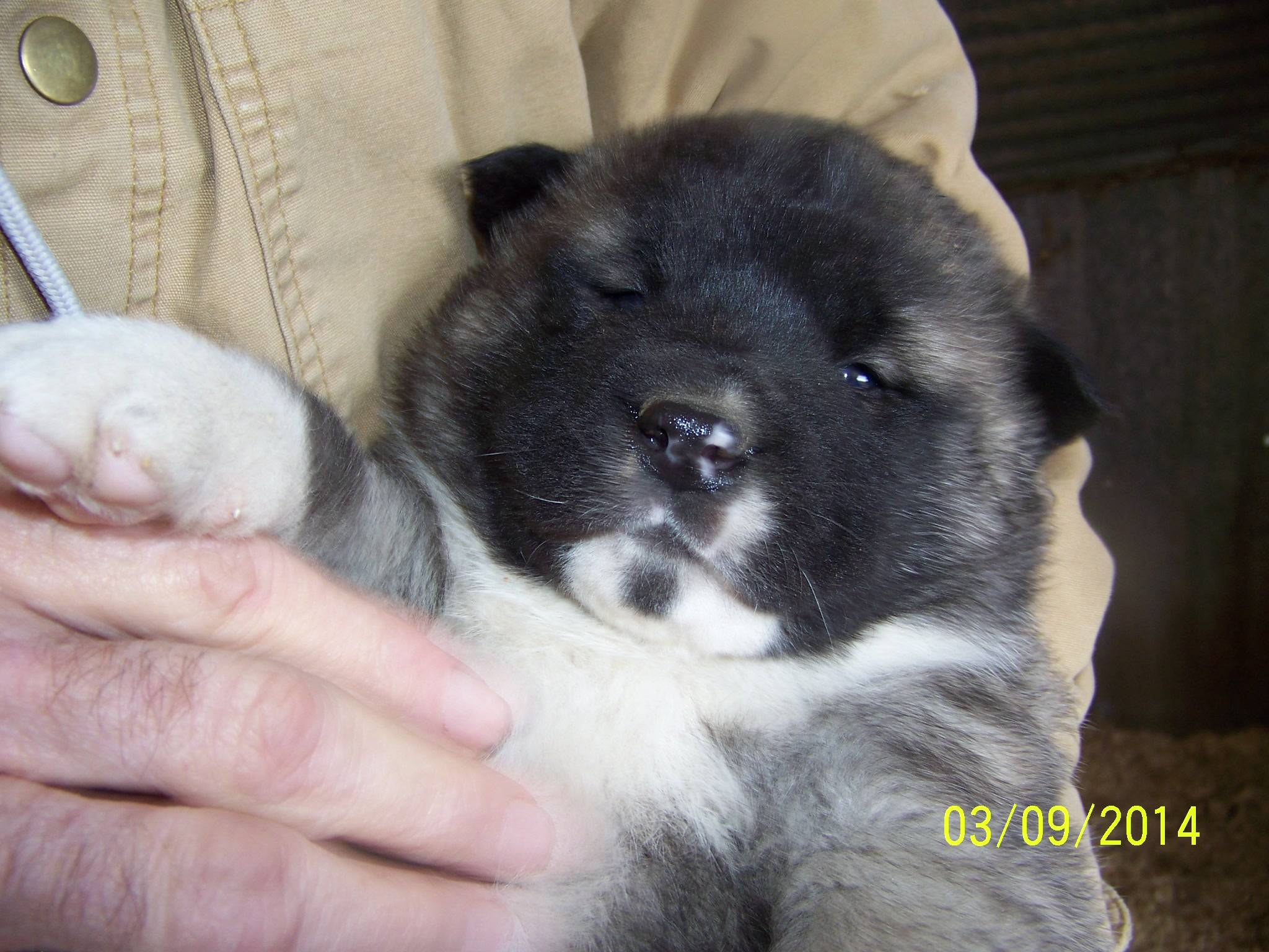 Meet Sumo!