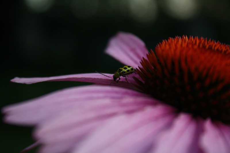 little yellow and black bug on flower