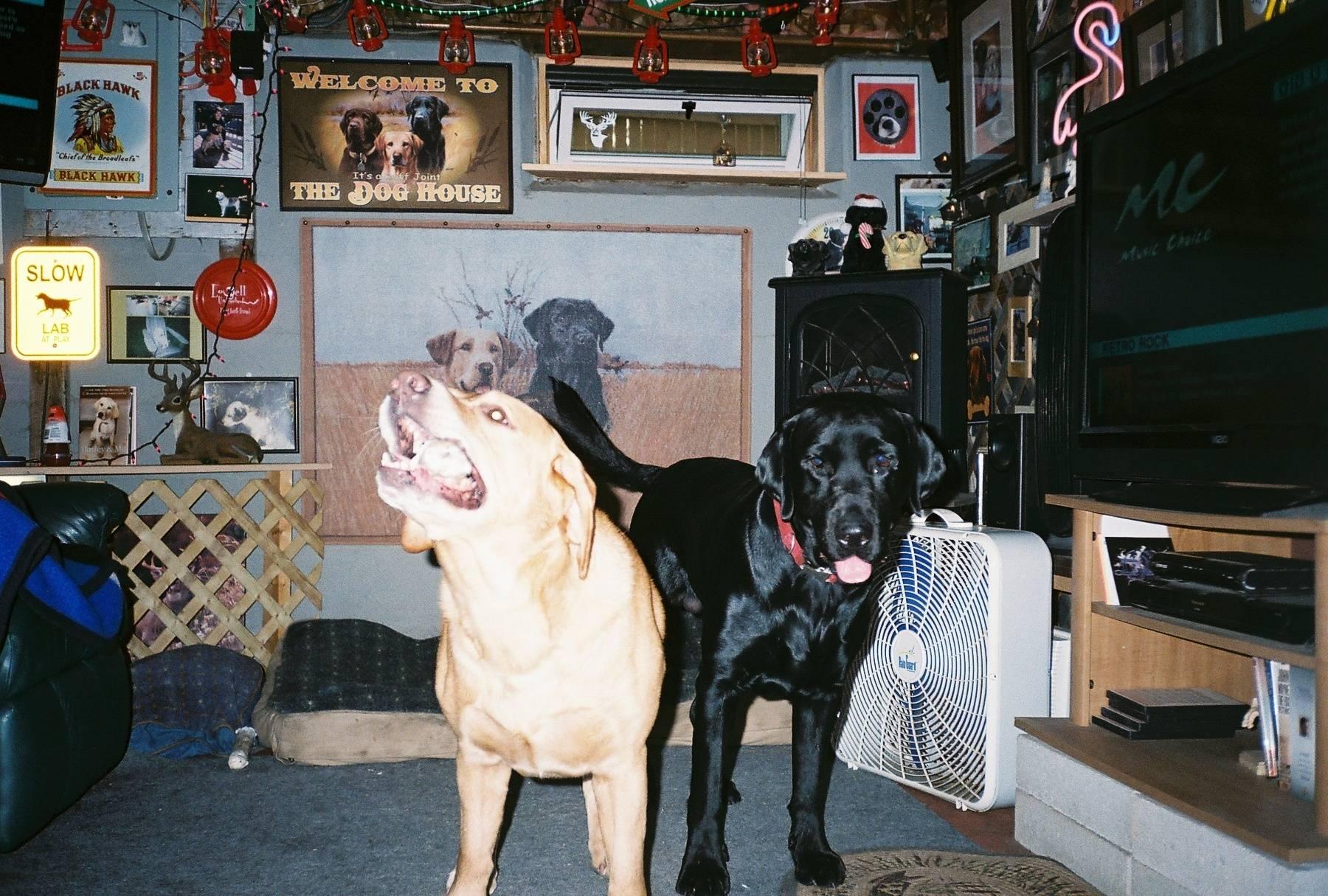 Bear & Kodiak