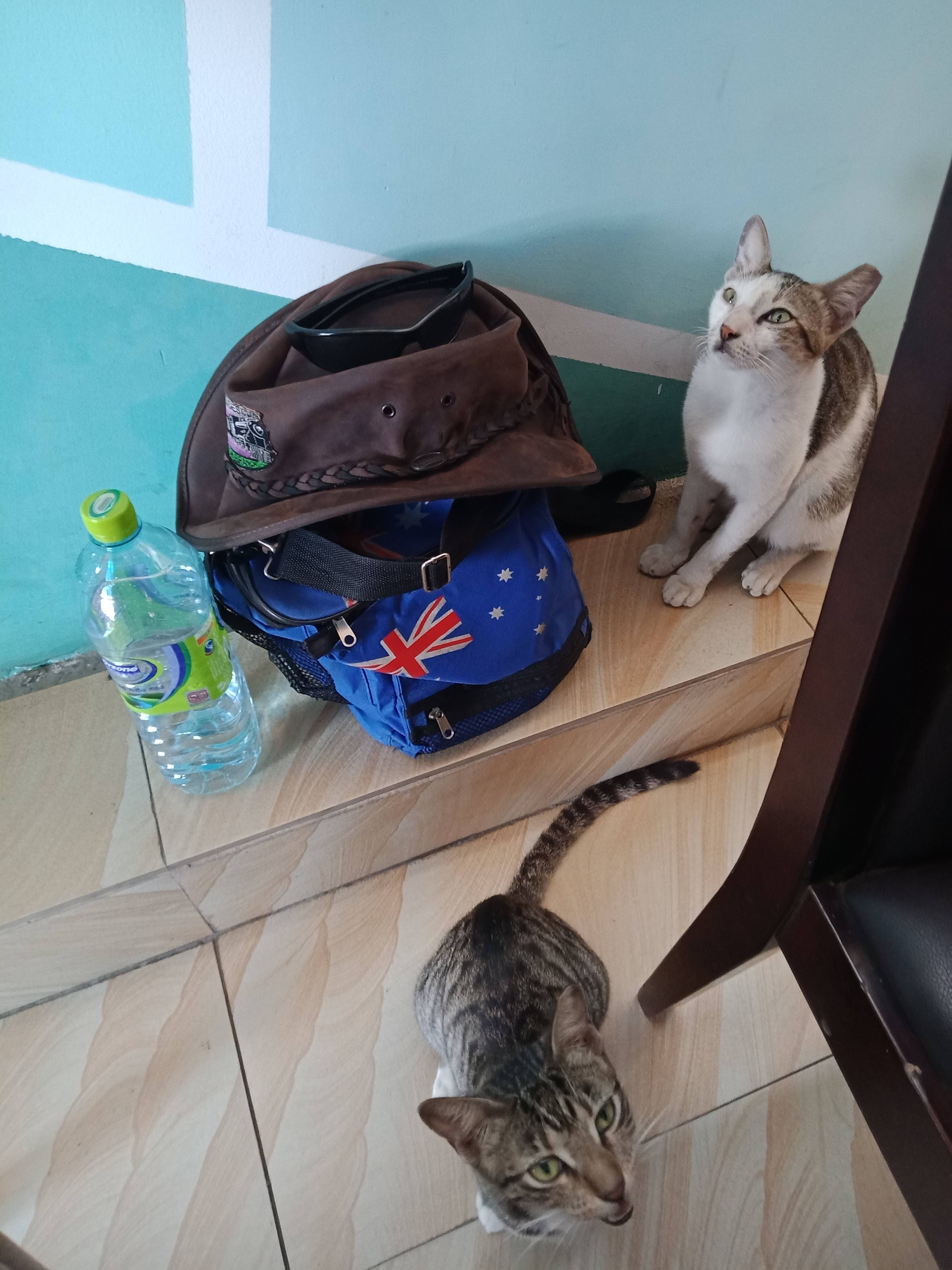 Cats begging for food
