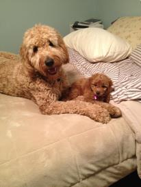 Lilah & her big bro Bentley