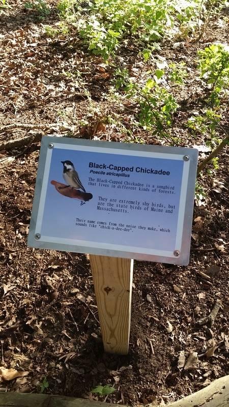 Chickadee sign