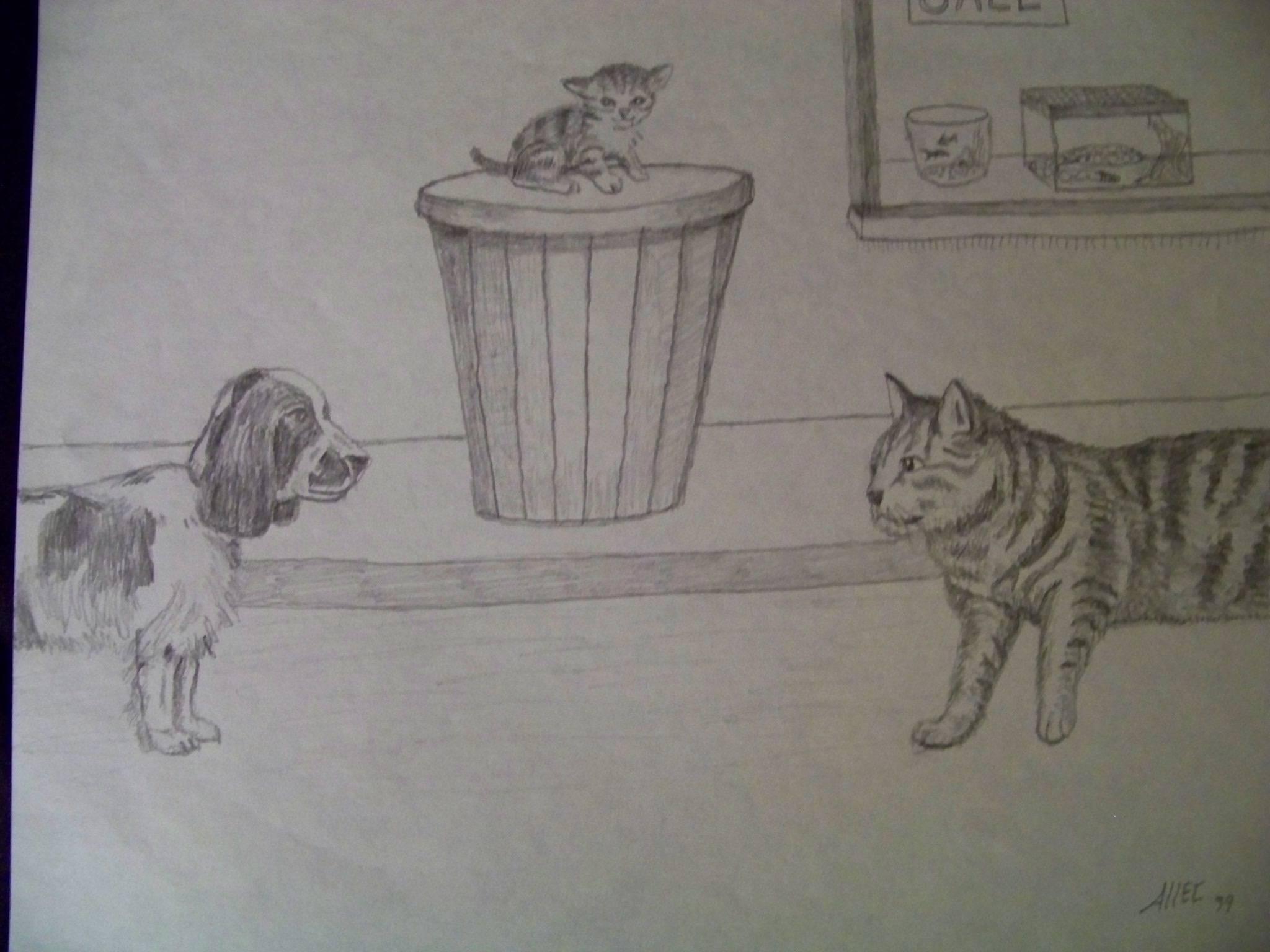 Cat versus dog