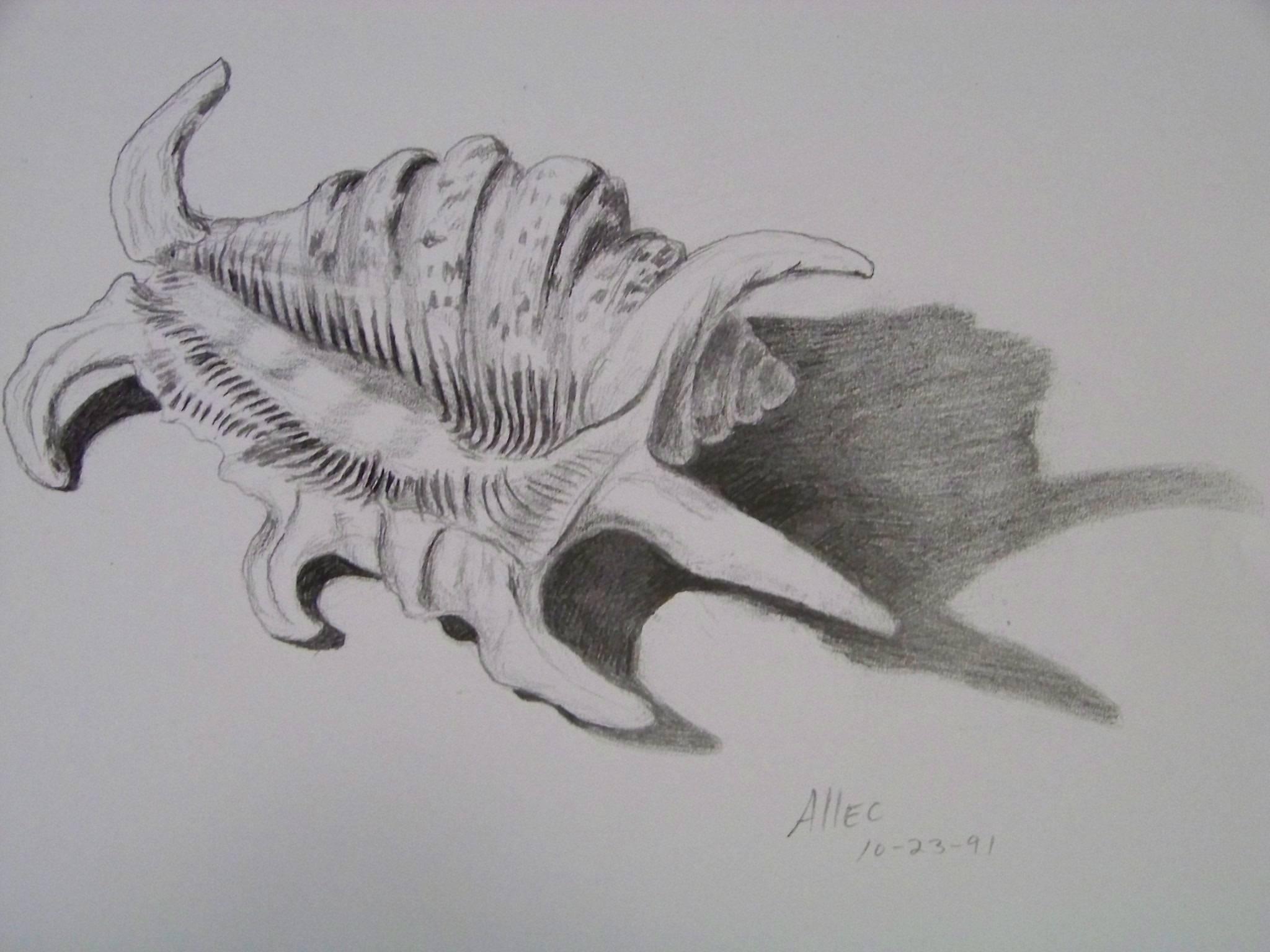 Tiger shell