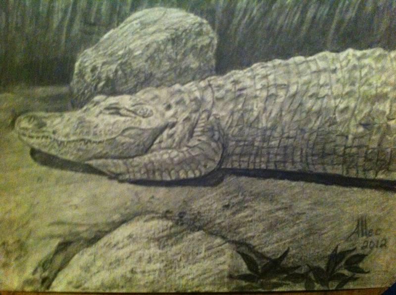 Resting Alligator