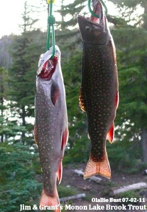 Olallie Lake Brook Trout