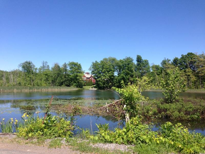 Turtle Pond View