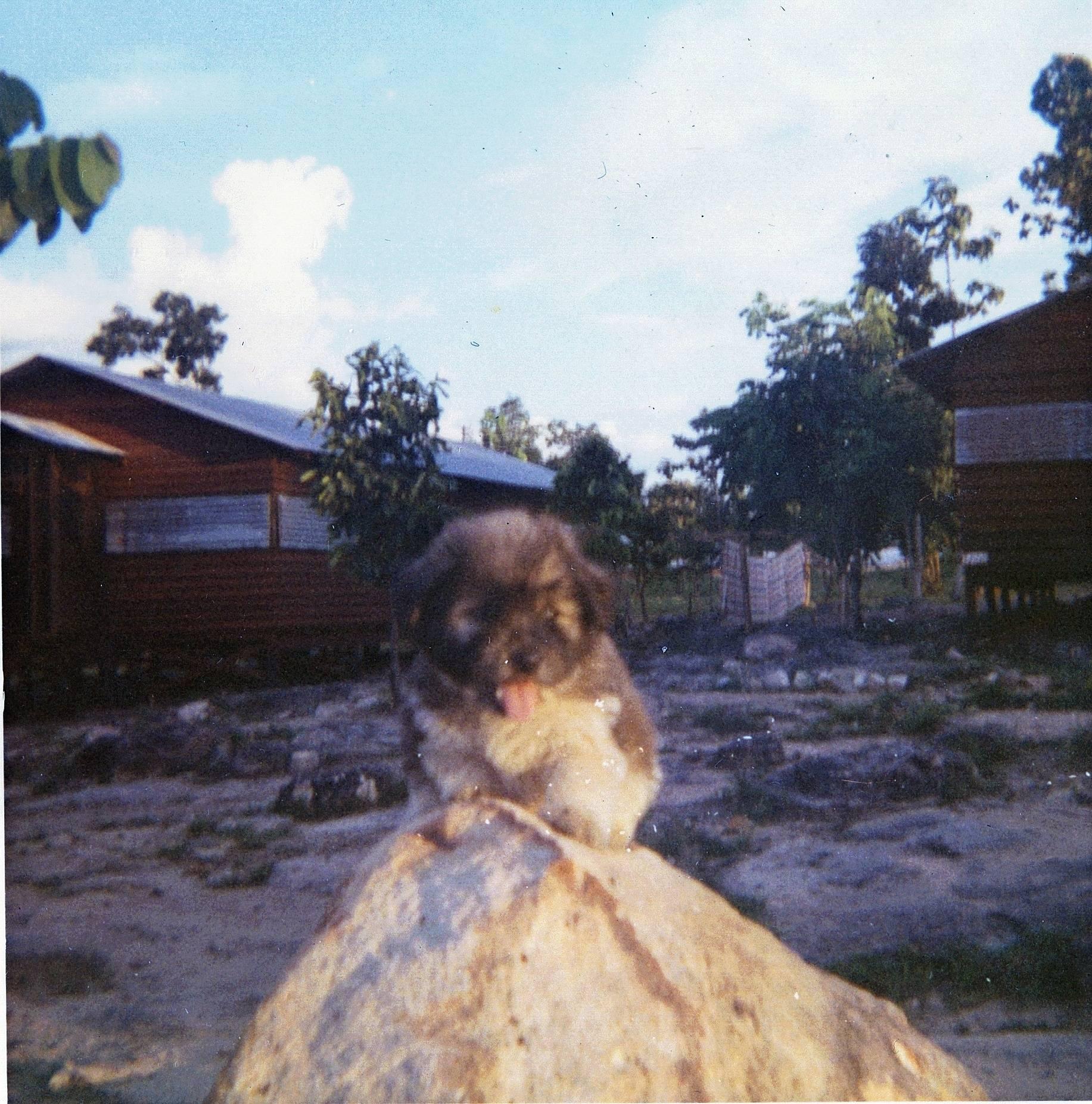 A Co.area  1966