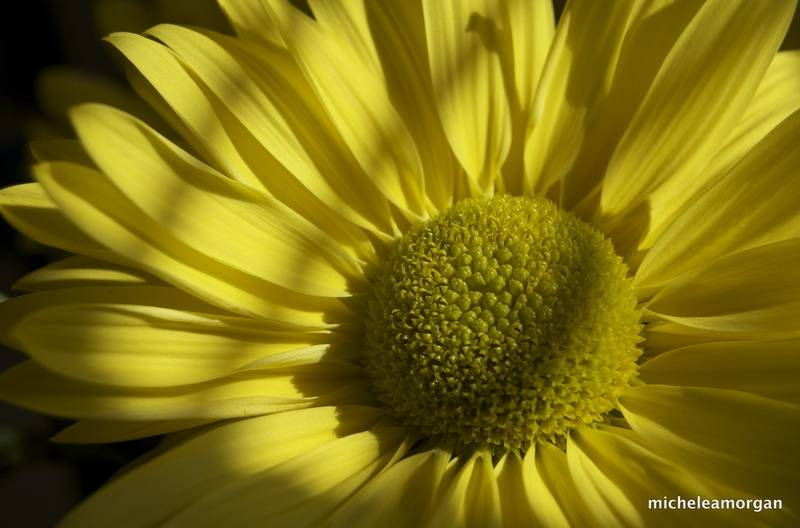 Afternoon Yellow
