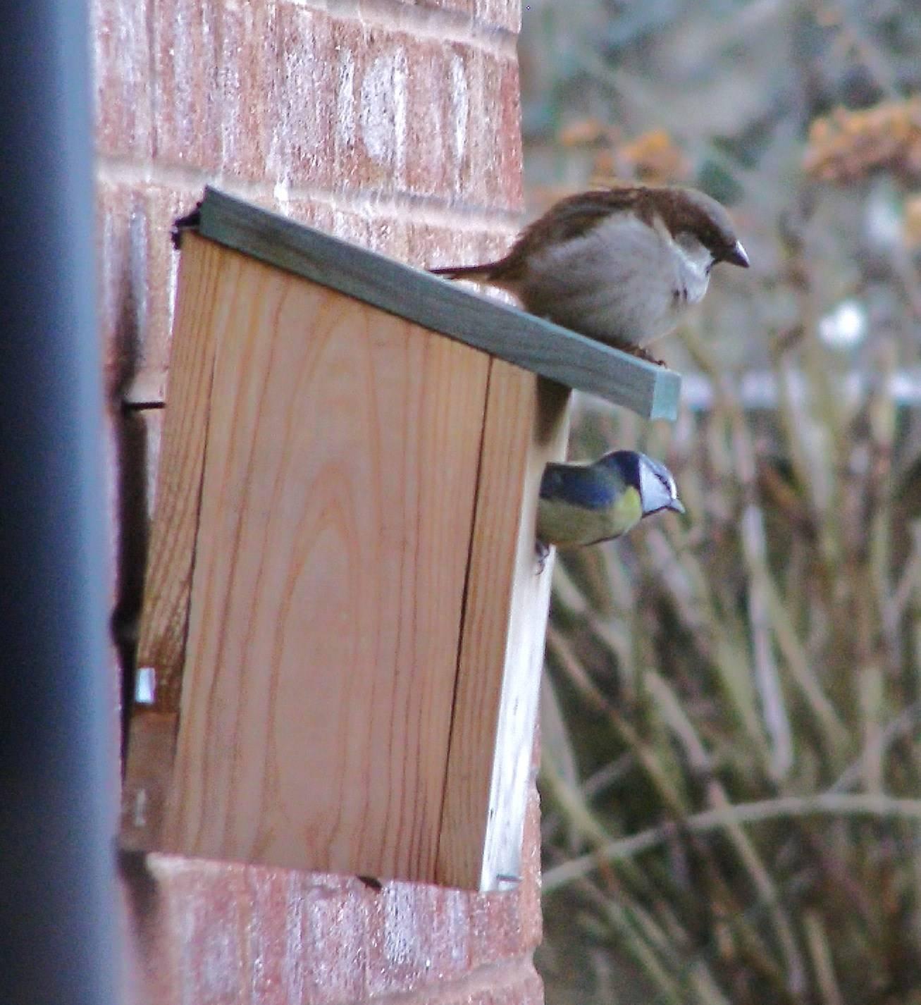 nest box envy