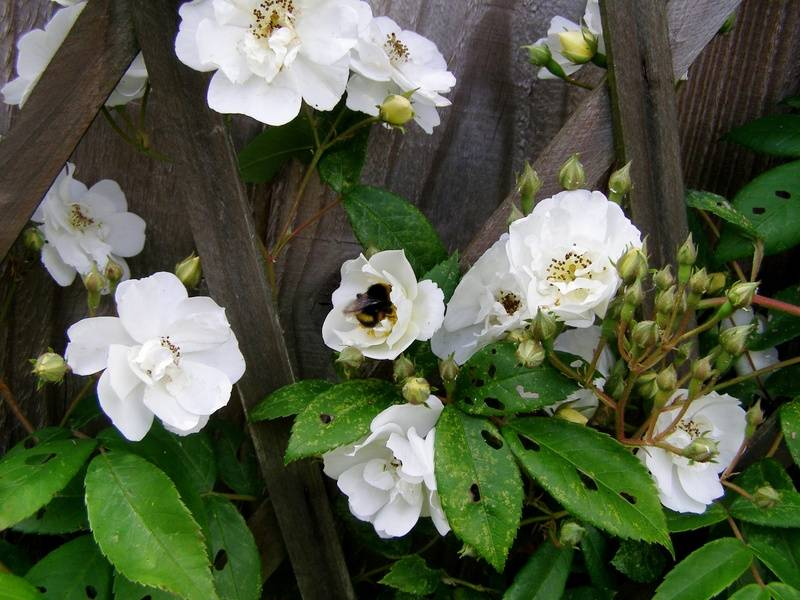 Basic Blooms for bees