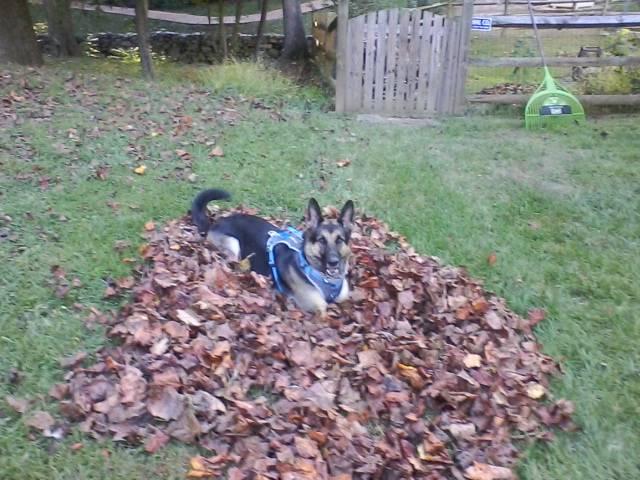 Witten On Leaf Pile