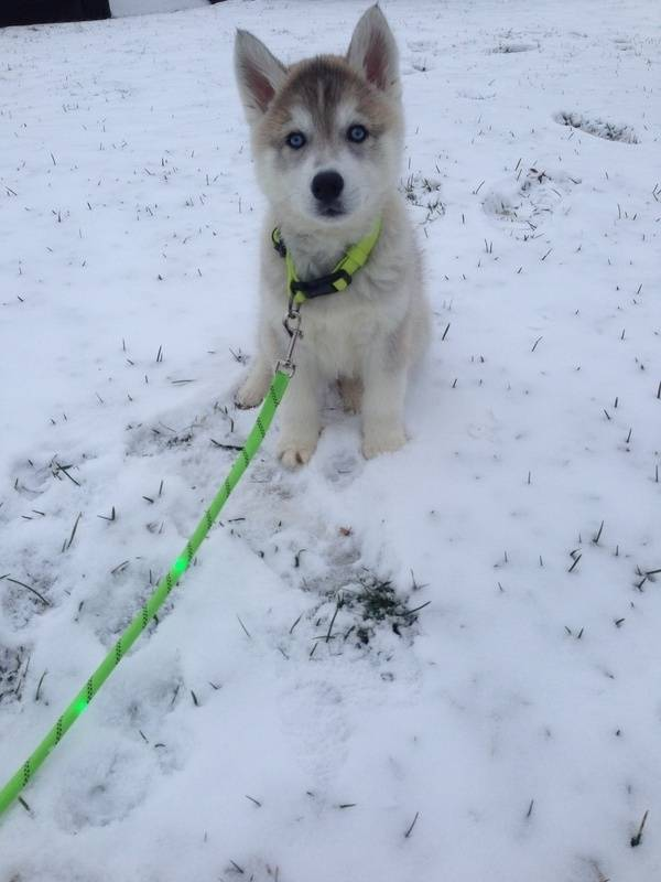 frolicking in the snow