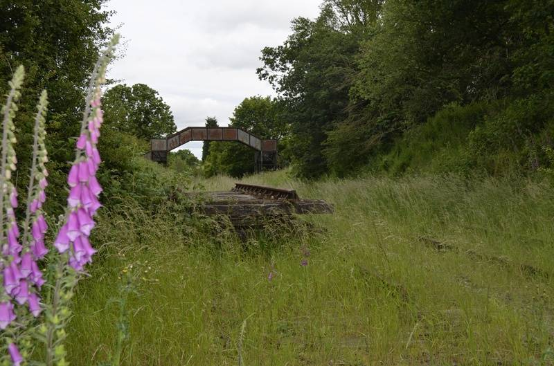 Foxgloves growing beside the tracks