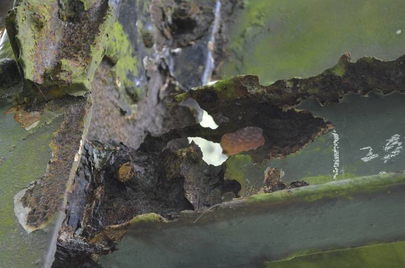 More rott in the bridge structure