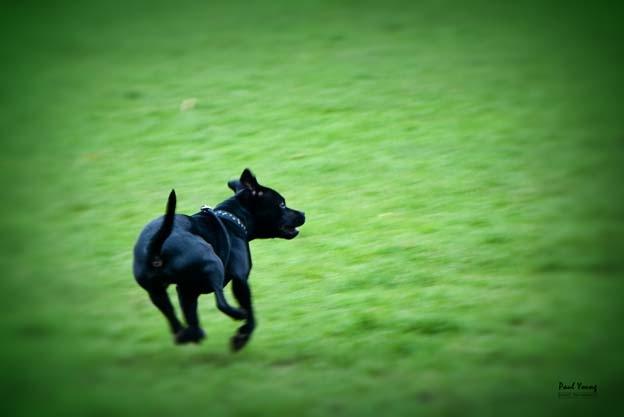 Saffie on the run
