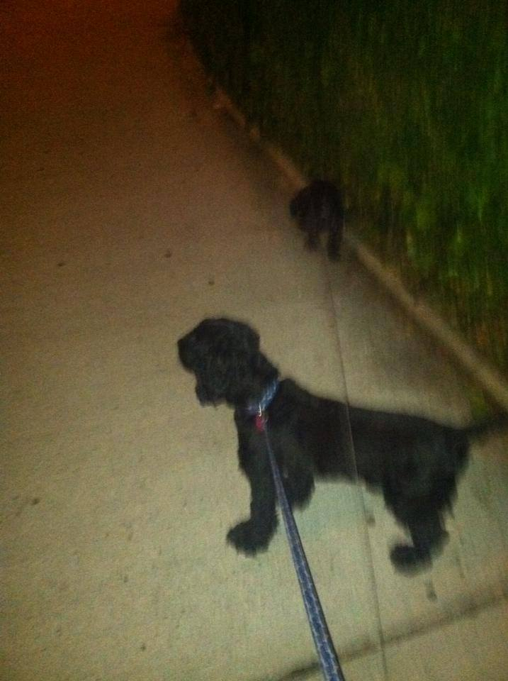 Going for a stroll with his bud Charlie