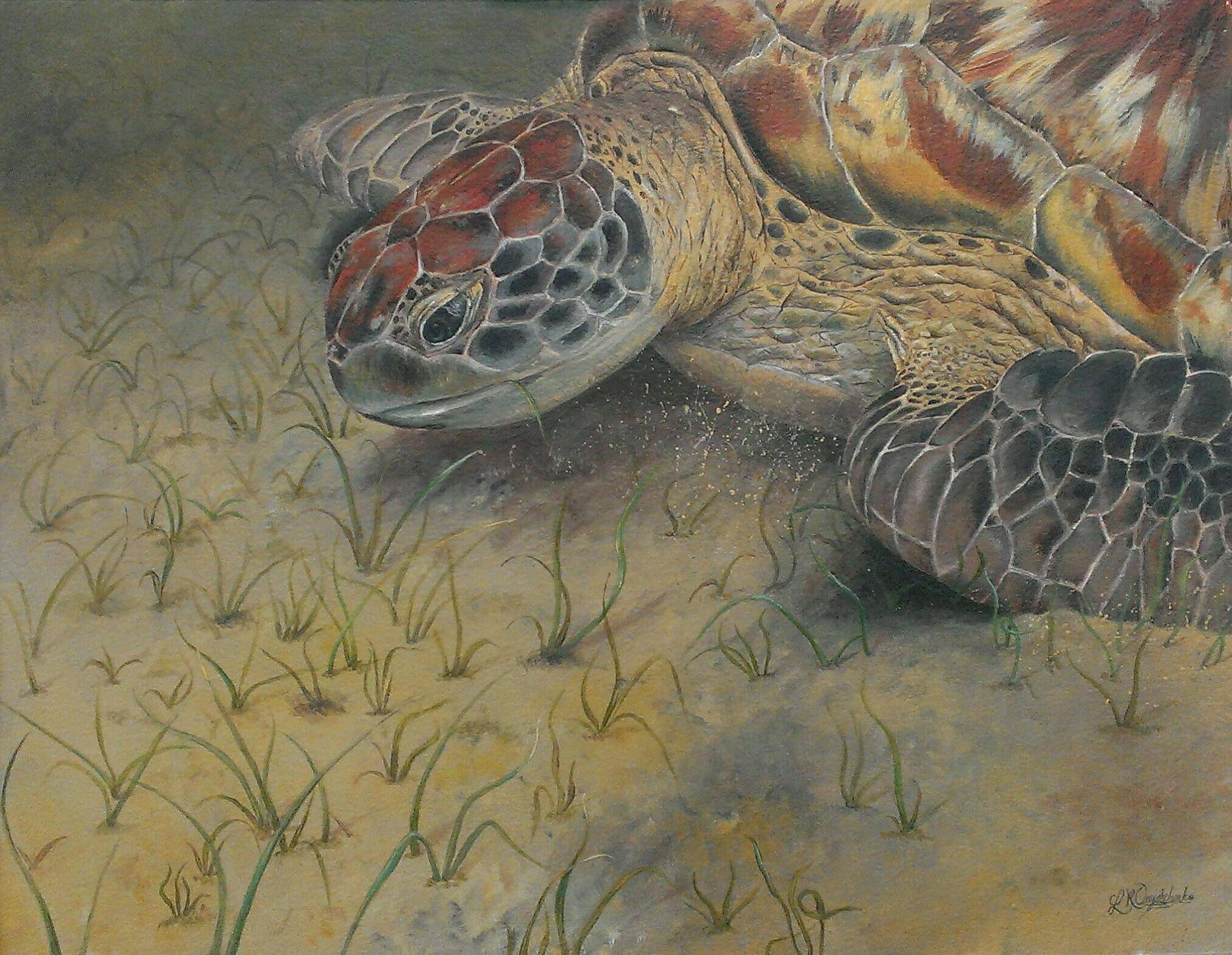 Grazing Sea Turtle