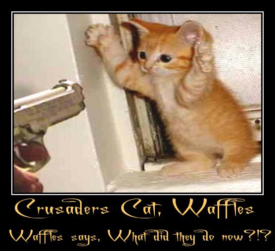 Crusader`s Cat, Waffles.
