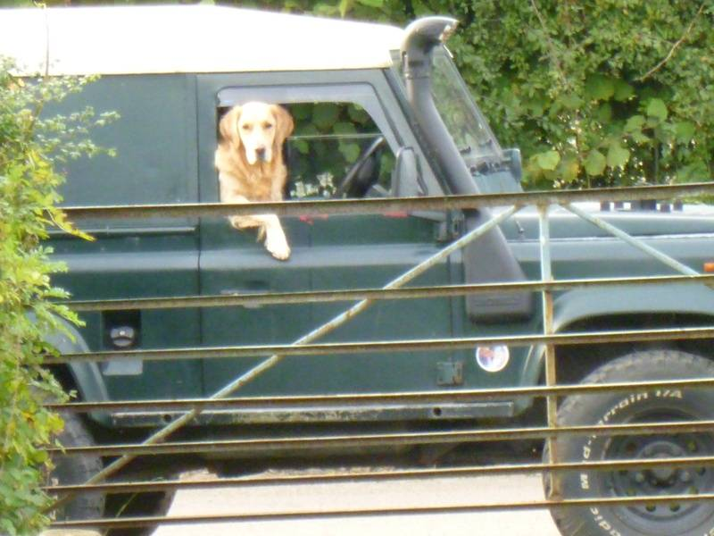 Doggy driver