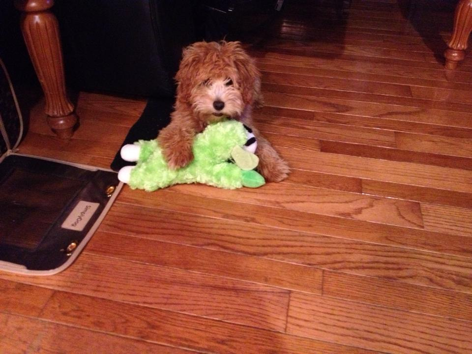 Rosie and green lamby!