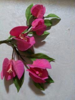 Bougainvillea Spray