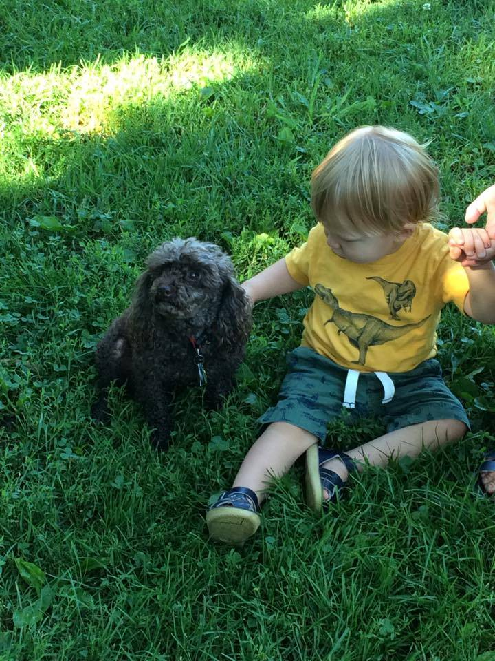 Summer 2015 Chocolate Chip allowing a baby to pet him