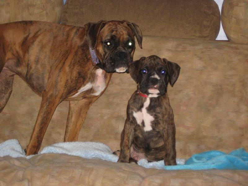 Abby and Samson (Soco&Rocky 1yr apart)