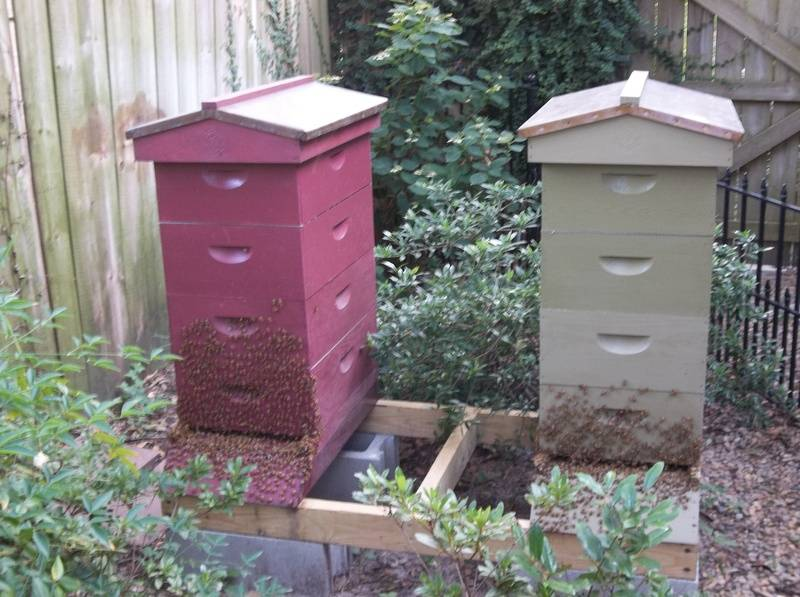 my 2 hives